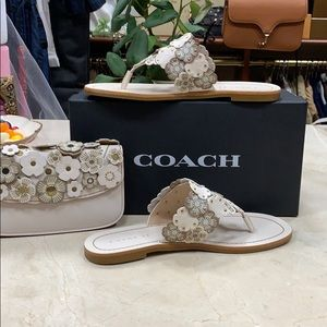COACH LOTTIE TEA ROSE FLAT THONG SANDAL IN CHALK